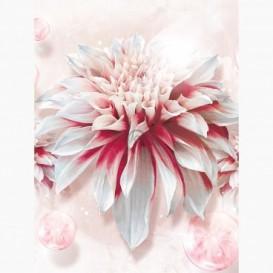 Fototapeta - PL1043 - Bielo-ružový kvet