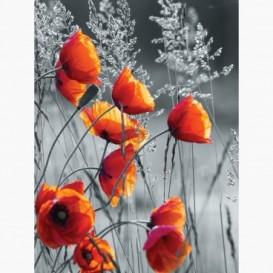 Fototapeta - PL1389 - Červené maky