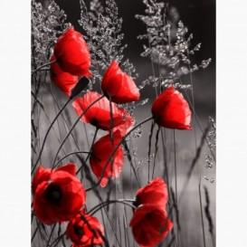 Fototapeta - PL1399 - Červené maky