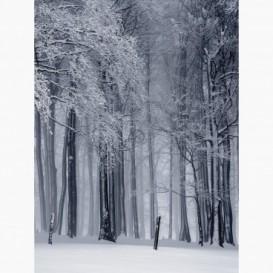 Fototapeta - PL1476 - Zimný les