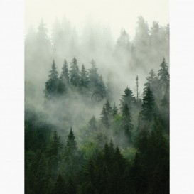 Fototapeta - PL1478 - Hmlistý les