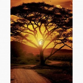 Fototapeta - PL1620 - Západ slnka na safari