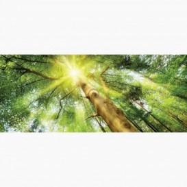 Fototapeta - PA5033 - Listnatý les