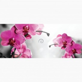 Fototapeta - PA5053 - Ružová orchidea