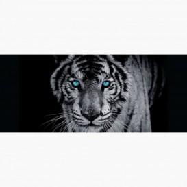 Fototapeta - PA5067 - Čierno-biely tiger