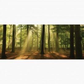 Fototapeta - PA5098 - Listnatý les
