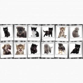 Fototapeta - PA5120 - Psíkovia a mačičky