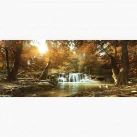 Fototapeta - PA5134 - Jesenný les