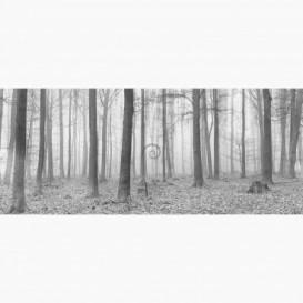 Fototapeta - PA5285 - Čierno-biely les