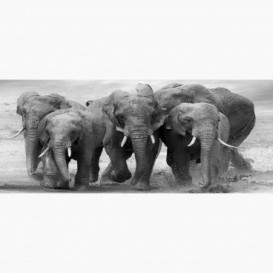 Fototapeta - PA5334 - Čierno-biele slony