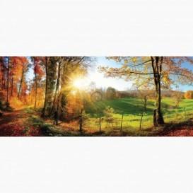 Fototapeta - PA5354 - Jesenný les