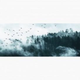 Fototapeta - PA5381 - Pochmúrny les