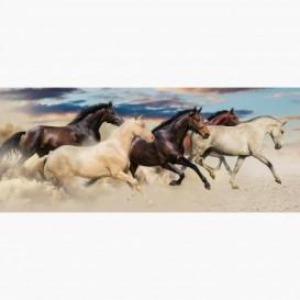 Fototapeta - PA5395 - Cválajúce kone