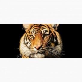 Fototapeta - PA5399 - Tiger