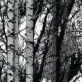 Samolepící fólie 200-3197 Les 45cm x 15m