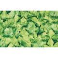 Samolepiaca fólia 10195 Listy 45cm x 15m