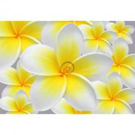 Fototapeta na stenu - FT0113 - Žltobiely kvet