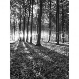 Fototapeta panel - PL0339 - Les - čiernobiely