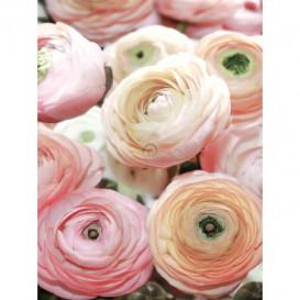 Fototapeta panel - PL0379 - Ruže
