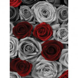Fototapeta panel - PL0659 - Ruže
