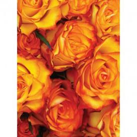 Fototapeta panel - PL0781 - Oranžové ruže