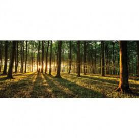 Panoramatická fototapeta - FT2743 - Les
