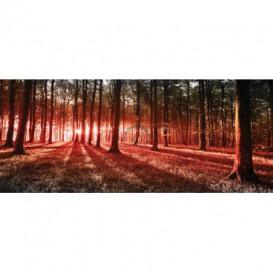 Panoramatická fototapeta - FT2745 - Les