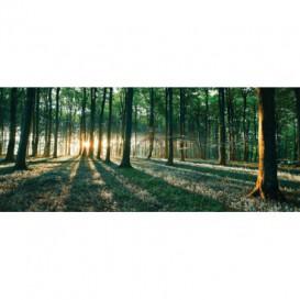 Panoramatická fototapeta - FT2746 - Les