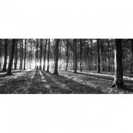 Panoramatická fototapeta - FT2747 - Les - čiernobiely