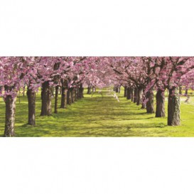 Panoramatická fototapeta - PA0142 - Ružové stromy