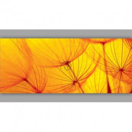 Panoramatická fototapeta - PA0186 - Oranžová púpava
