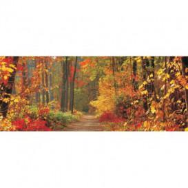 Panoramatická fototapeta - PA0193 - Les v jeseni