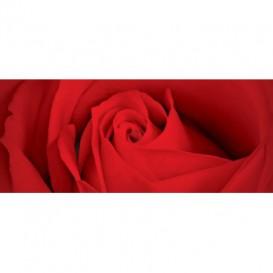 Panoramatická fototapeta - PA0313 - Červená ruža