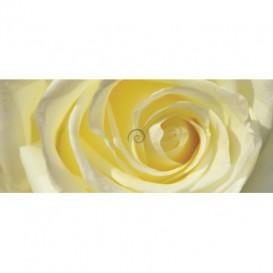 Panoramatická fototapeta - PA0342 - Žltobiela ruža