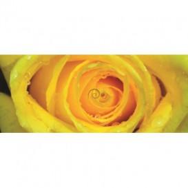 Panoramatická fototapeta - PA0348 - Žltá ruža