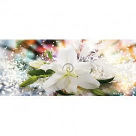 Panoramatická fototapeta - PA4348 - Biely kvet