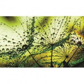 Fototapeta na stenu - FT0286 - Rosa na kvete