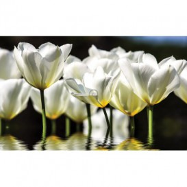 Fototapeta na stenu - FT2401 - Biele tulipány