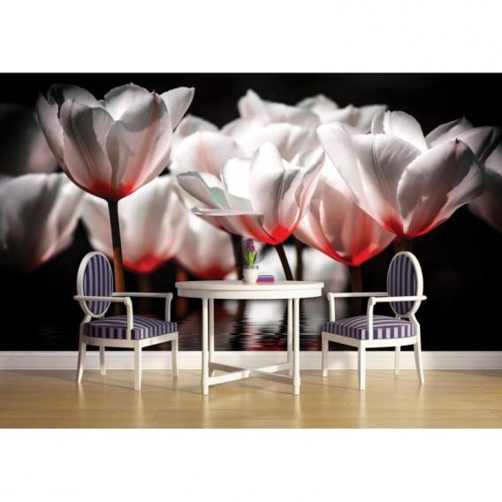 Fototapeta na stenu - FT2686 - Bielo červené tulipány