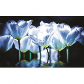 Fototapeta na stenu - FT2687 - Bielo modré tulipány