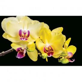 Fototapeta na stenu - FT2954 - Žlté kvety