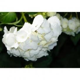 Fototapeta na stenu - FT4536 - Biele kvety