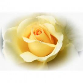 Fototapeta na stenu - FT4541 - Žltá ruža