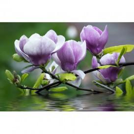 Fototapeta na zeď - FT0114 - Fialový květ