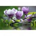 Fototapeta na stenu - FT0114 - Fialový kvet
