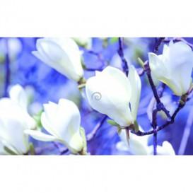 Fototapeta na zeď - FT2983 - Bílé magnólie