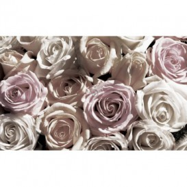 Fototapeta na stenu - FT2969 - Bielo – ružové ruže