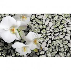 Fototapeta na stenu - FT2985 - Biele kvety na kameňoch