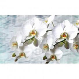 Fototapeta na stenu - FT2992 - Biele kvety na bielom pozadí
