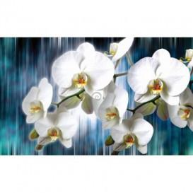 Fototapeta na stenu - FT2993 - Biele kvety na modrom pozadí